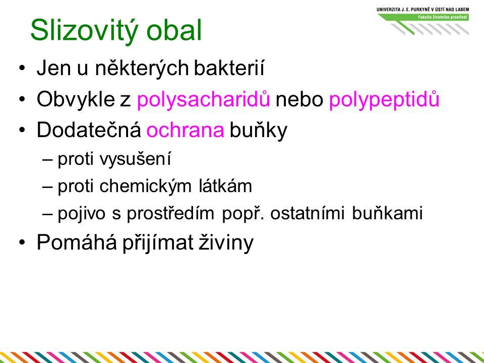 Slizovitý obal Jen u některých bakterií Obvykle z polysacharidů nebo polypeptidů Dodatečná ochrana buňky –proti vysušení –proti chemickým látkám –poji