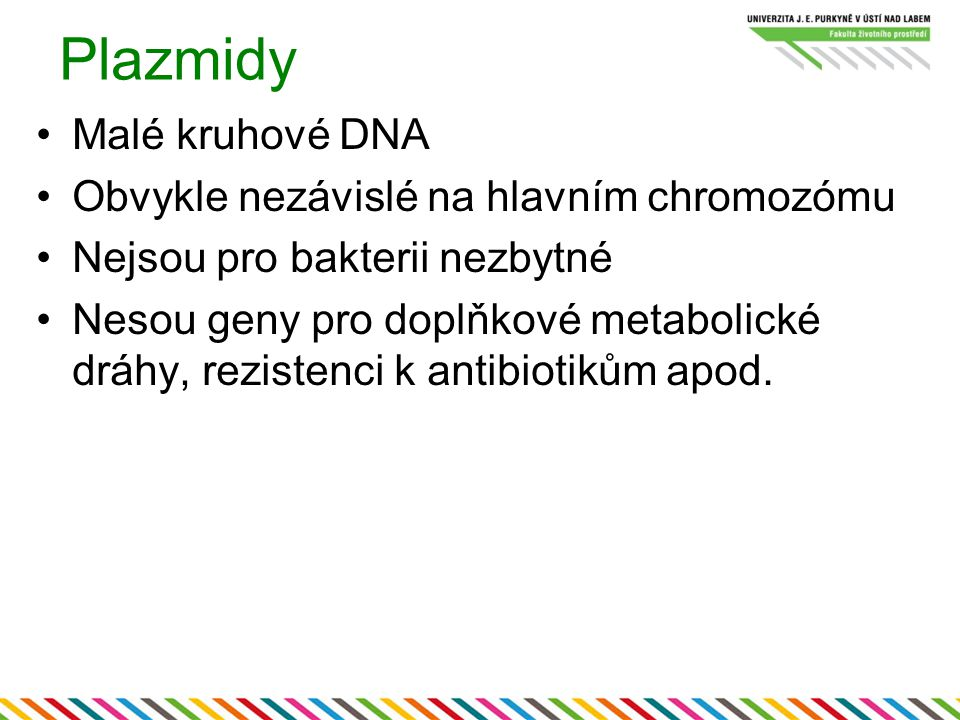 Plazmidy Malé kruhové DNA Obvykle nezávislé na hlavním chromozómu Nejsou pro bakterii nezbytné Nesou geny pro doplňkové metabolické dráhy, rezistenci