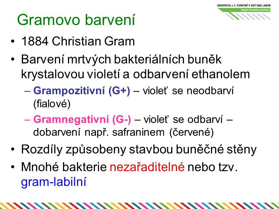 Gramovo barvení 1884 Christian Gram Barvení mrtvých bakteriálních buněk krystalovou violetí a odbarvení ethanolem –Grampozitivní (G+) – violeť se neod