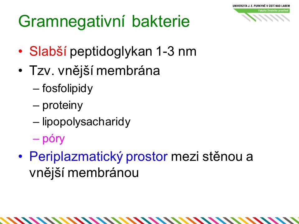 Gramnegativní bakterie Slabší peptidoglykan 1-3 nm Tzv. vnější membrána –fosfolipidy –proteiny –lipopolysacharidy –póry Periplazmatický prostor mezi s