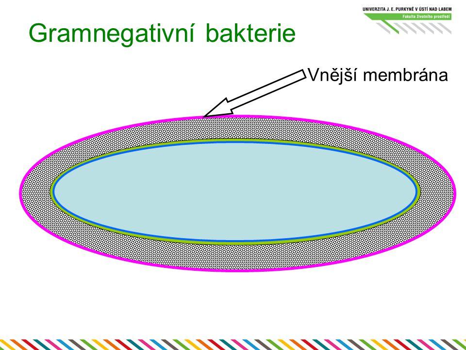 Gramnegativní bakterie Vnější membrána
