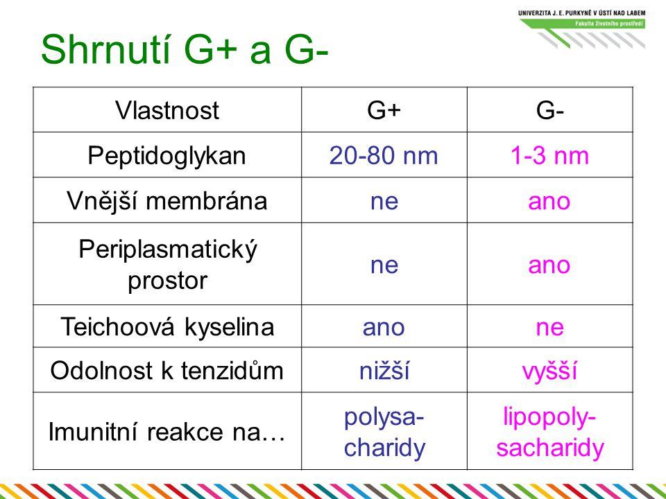 Shrnutí G+ a G- VlastnostG+G- Peptidoglykan20-80 nm1-3 nm Vnější membránaneano Periplasmatický prostor neano Teichoová kyselinaanone Odolnost k tenzid