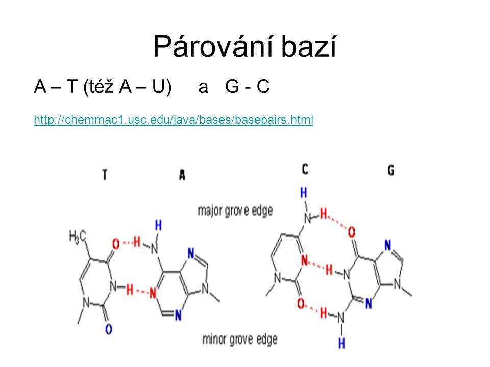 Párování bazí A – T (též A – U) a G - C http://chemmac1.usc.edu/java/bases/basepairs.html