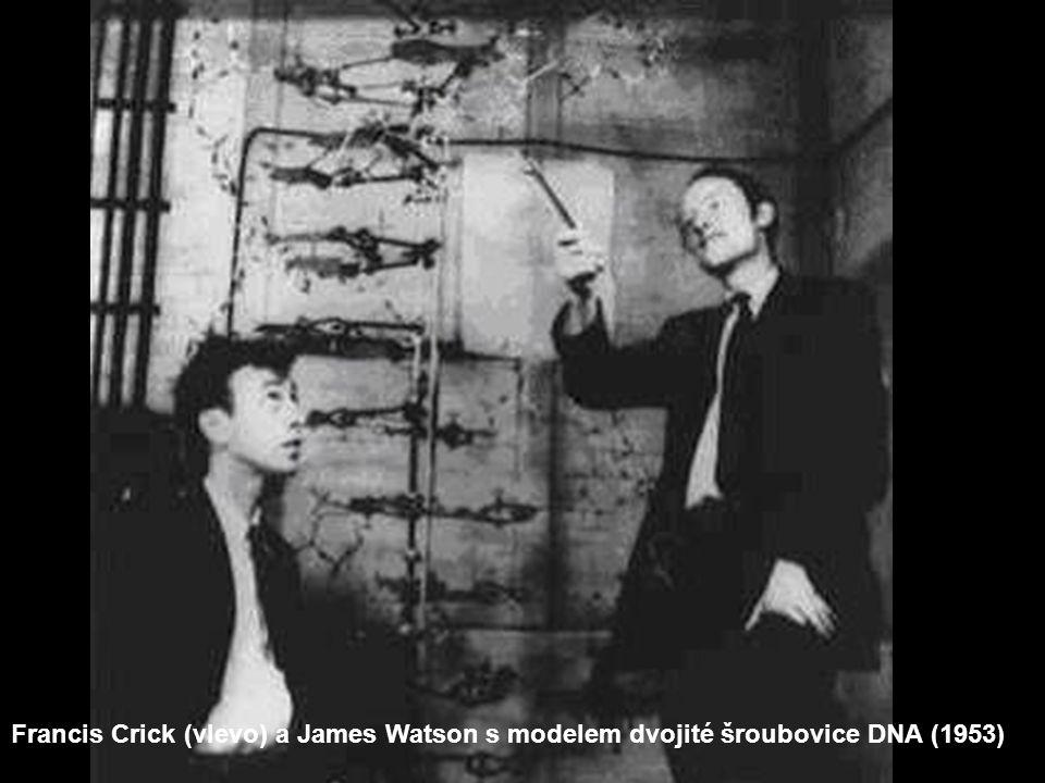 Francis Crick (vlevo) a James Watson s modelem dvojité šroubovice DNA (1953)