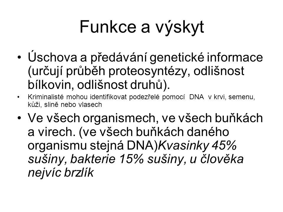 Funkce a výskyt Úschova a předávání genetické informace (určují průběh proteosyntézy, odlišnost bílkovin, odlišnost druhů). Kriminalisté mohou identif