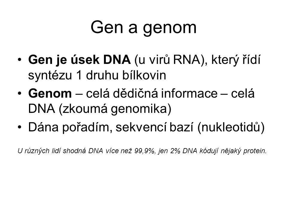 Gen a genom Gen je úsek DNA (u virů RNA), který řídí syntézu 1 druhu bílkovin Genom – celá dědičná informace – celá DNA (zkoumá genomika) Dána pořadím