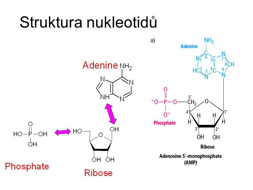 tRNA štruktúra