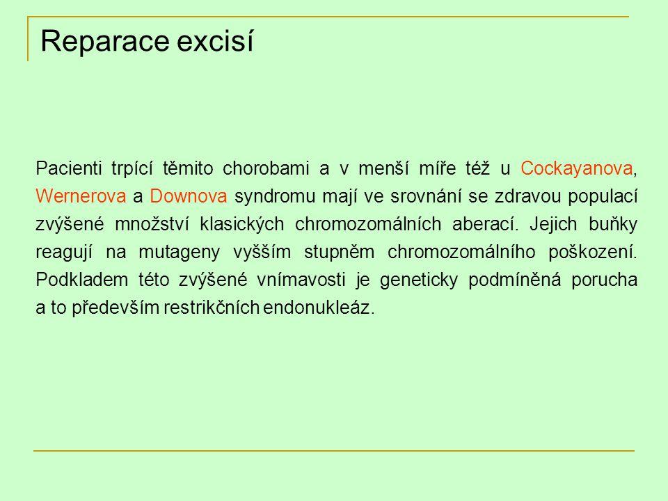 Reparace excisí Pacienti trpící těmito chorobami a v menší míře též u Cockayanova, Wernerova a Downova syndromu mají ve srovnání se zdravou populací z