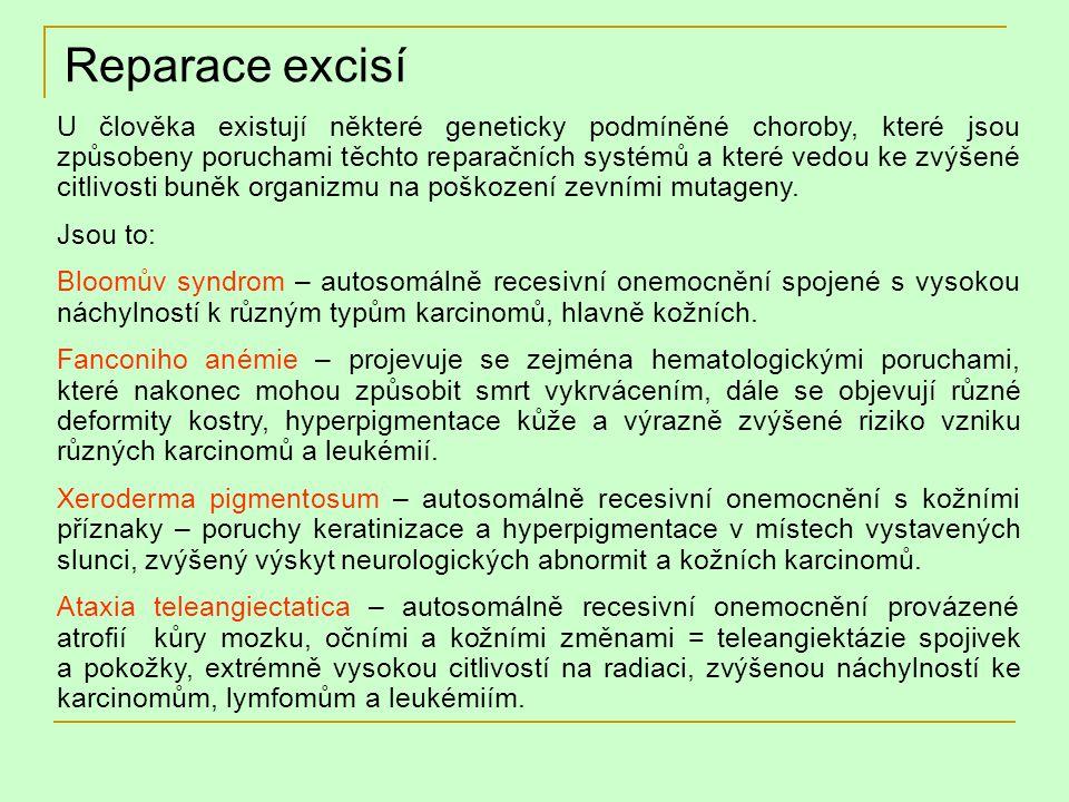 Reparace excisí U člověka existují některé geneticky podmíněné choroby, které jsou způsobeny poruchami těchto reparačních systémů a které vedou ke zvý