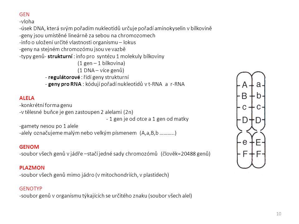 GEN -vloha -úsek DNA, která svým pořadím nukleotidů určuje pořadí aminokyselin v bílkovině -geny jsou umístěné lineárně za sebou na chromozomech -info