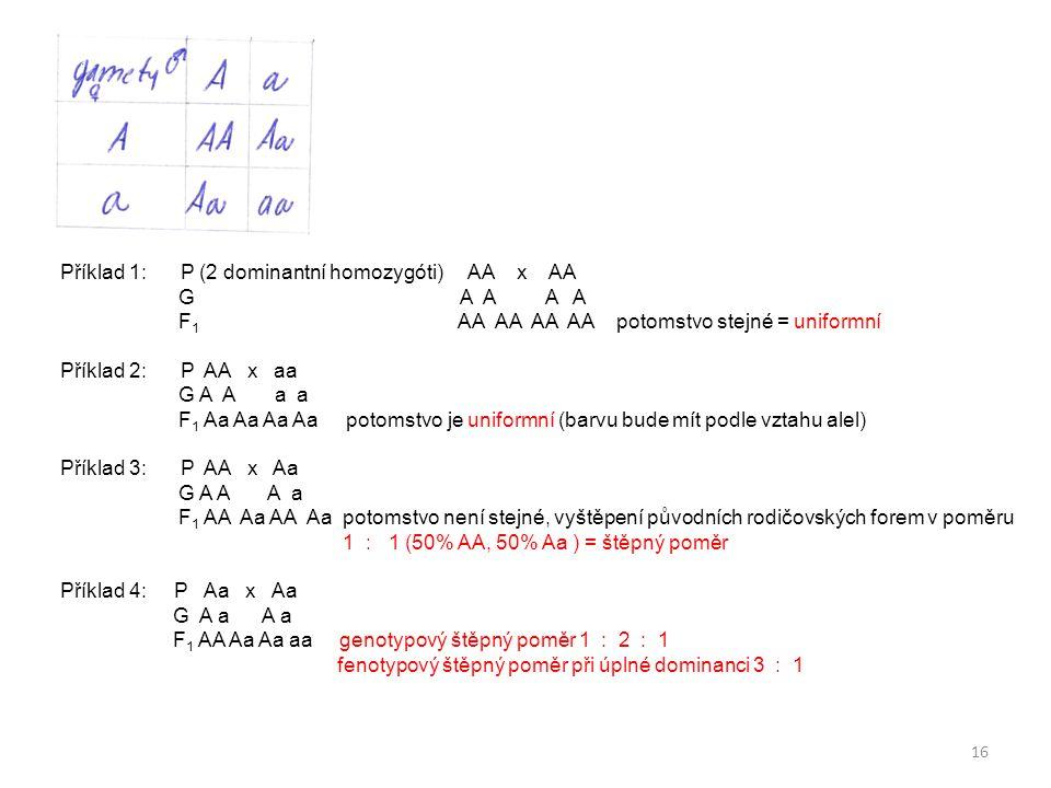 16 Příklad 1: P (2 dominantní homozygóti) AA x AA G A A A A F 1 AA AA AA AA potomstvo stejné = uniformní Příklad 2: P AA x aa G A A a a F 1 Aa Aa Aa A