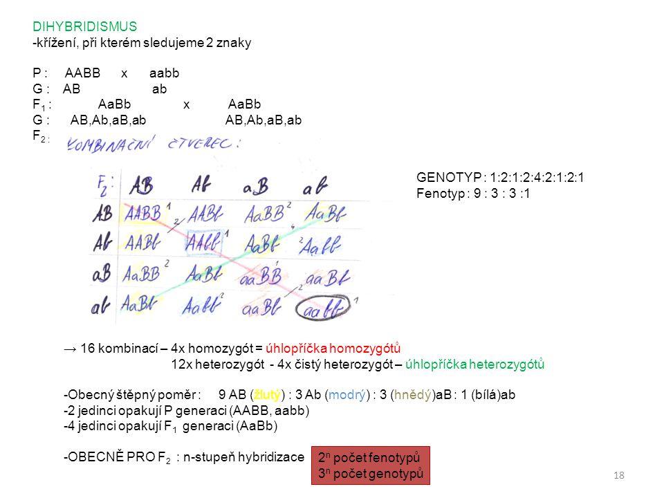 18 DIHYBRIDISMUS -křížení, při kterém sledujeme 2 znaky P : AABB x aabb G : AB ab F 1 : AaBb x AaBb G : AB,Ab,aB,ab AB,Ab,aB,ab F 2 : GENOTYP : 1:2:1: