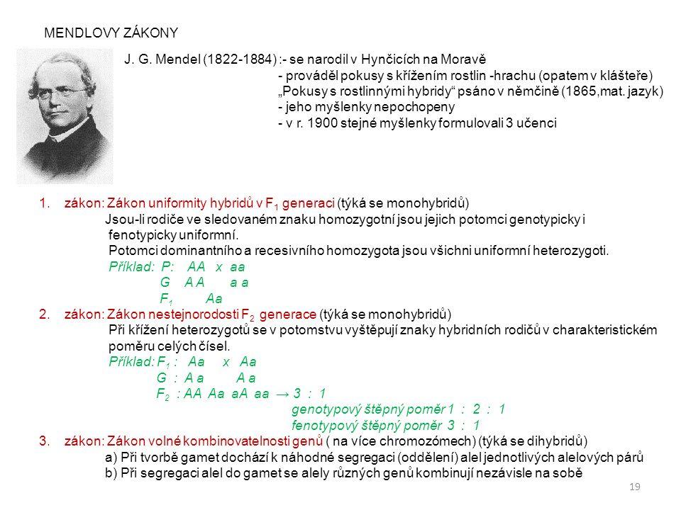 """19 MENDLOVY ZÁKONY J. G. Mendel (1822-1884) :- se narodil v Hynčicích na Moravě - prováděl pokusy s křížením rostlin -hrachu (opatem v klášteře) """"Poku"""