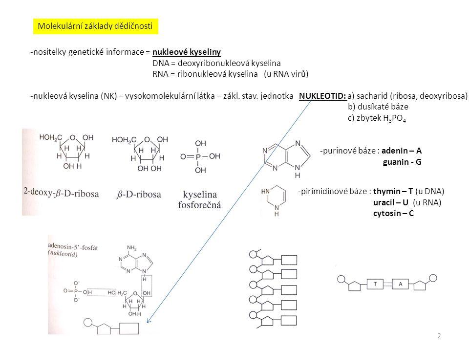 Molekulární základy dědičnosti -nositelky genetické informace = nukleové kyseliny DNA = deoxyribonukleová kyselina RNA = ribonukleová kyselina (u RNA