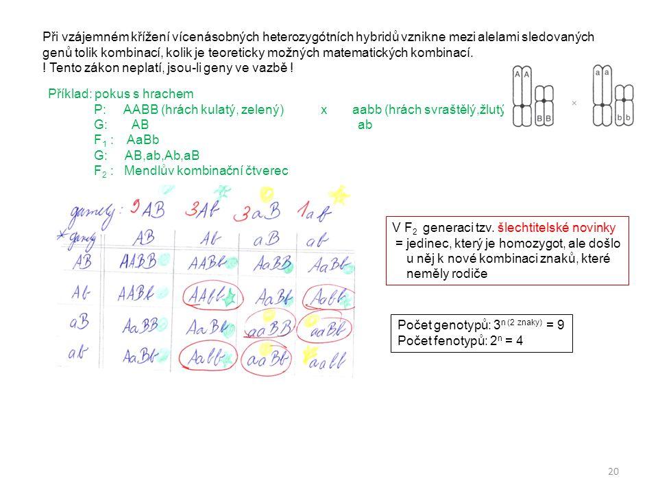 20 Příklad: pokus s hrachem P: AABB (hrách kulatý, zelený) x aabb (hrách svraštělý,žlutý) G: AB ab F 1 : AaBb G: AB,ab,Ab,aB F 2 : Mendlův kombinační