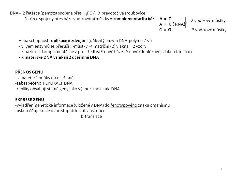 DNA = 2 řetězce (pentóza spojená přes H 3 PO 4 ) → pravotočivá šroubovice - řetězce spojeny přes báze vodíkovými můstky = komplementarita bází : A = T