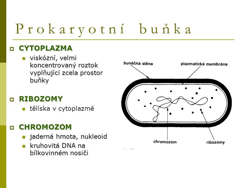  CYTOPLAZMA viskózní, velmi koncentrovaný roztok vyplňující zcela prostor buňky viskózní, velmi koncentrovaný roztok vyplňující zcela prostor buňky 