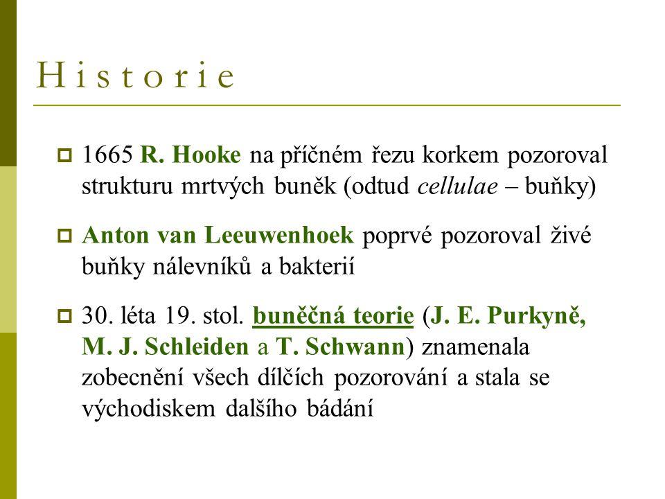 H i s t o r i e  1665 R. Hooke na příčném řezu korkem pozoroval strukturu mrtvých buněk (odtud cellulae – buňky)  Anton van Leeuwenhoek poprvé pozor
