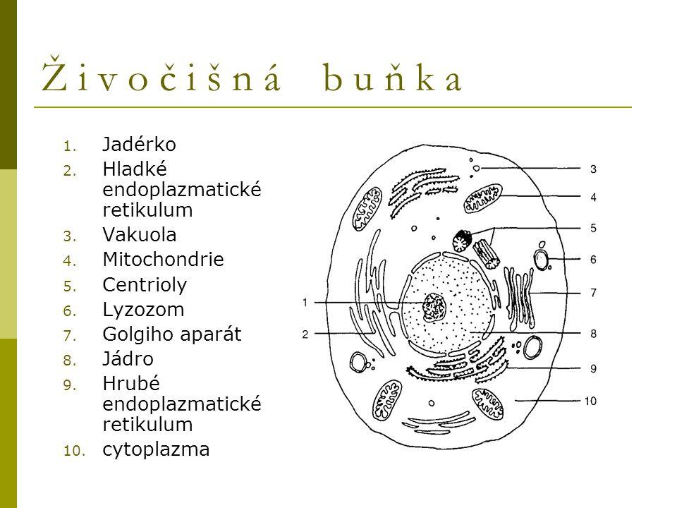 Ž i v o č i š n á b u ň k a 1. Jadérko 2. Hladké endoplazmatické retikulum 3. Vakuola 4. Mitochondrie 5. Centrioly 6. Lyzozom 7. Golgiho aparát 8. Jád