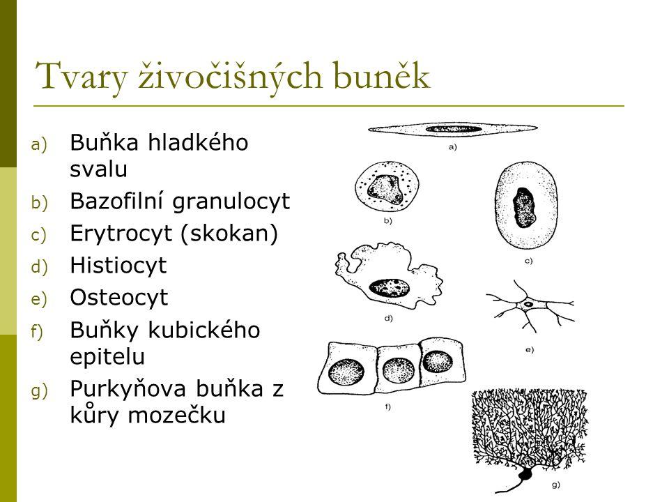 Tvary živočišných buněk a) Buňka hladkého svalu b) Bazofilní granulocyt c) Erytrocyt (skokan) d) Histiocyt e) Osteocyt f) Buňky kubického epitelu g) P
