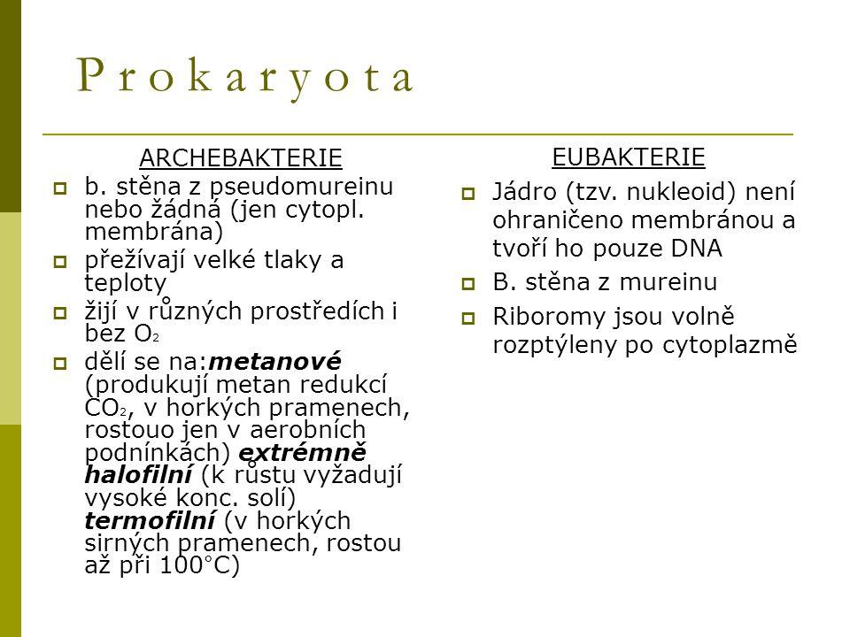 P r o k a r y o t a ARCHEBAKTERIE  b. stěna z pseudomureinu nebo žádná (jen cytopl. membrána)  přežívají velké tlaky a teploty  žijí v různých pros