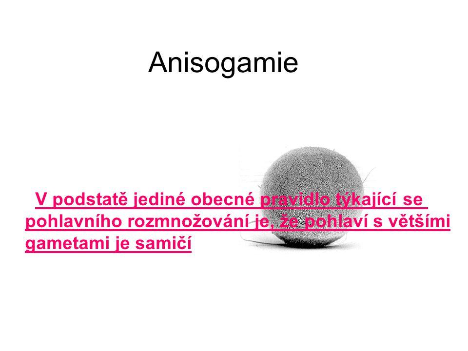 Anisogamie V podstatě jediné obecné pravidlo týkající se pohlavního rozmnožování je, že pohlaví s většími gametami je samičí