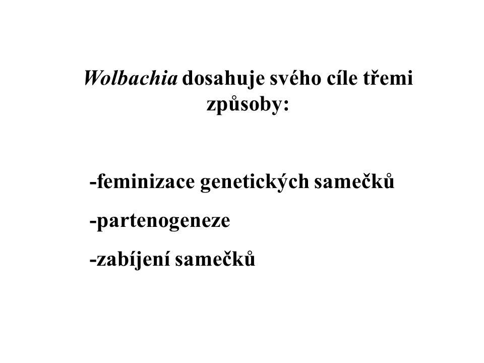 Wolbachia dosahuje svého cíle třemi způsoby: -feminizace genetických samečků -partenogeneze -zabíjení samečků