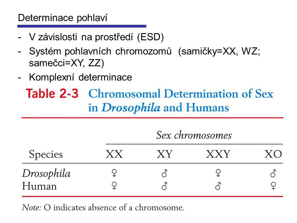 Determinace pohlaví -V závislosti na prostředí (ESD) -Systém pohlavních chromozomů (samičky=XX, WZ; samečci=XY, ZZ) -Komplexní determinace