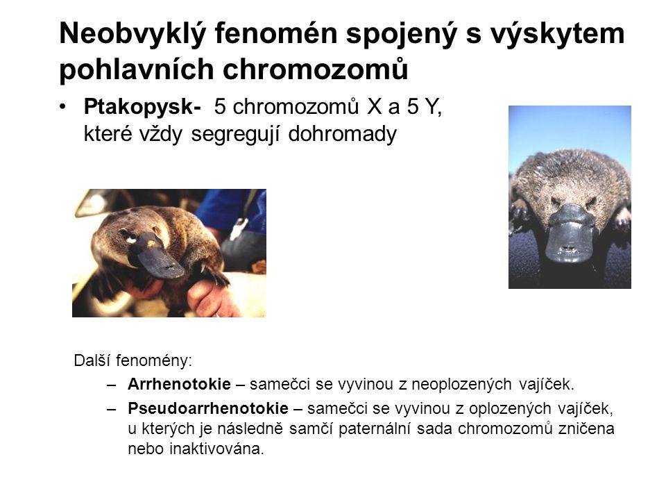 Neobvyklý fenomén spojený s výskytem pohlavních chromozomů Ptakopysk- 5 chromozomů X a 5 Y, které vždy segregují dohromady Další fenomény: –Arrhenotok