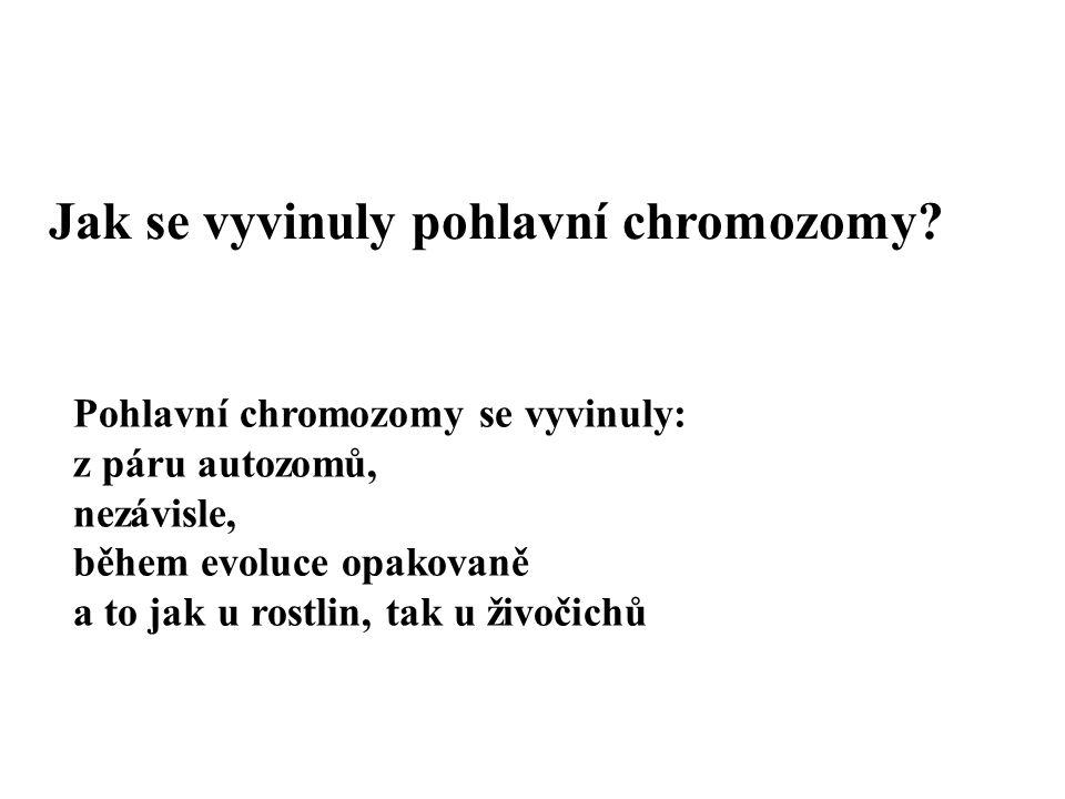 Pohlavní chromozomy se vyvinuly: z páru autozomů, nezávisle, během evoluce opakovaně a to jak u rostlin, tak u živočichů Jak se vyvinuly pohlavní chro