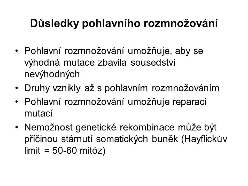 Evoluce pohlavních chromozomů A X SRY YX YX Y
