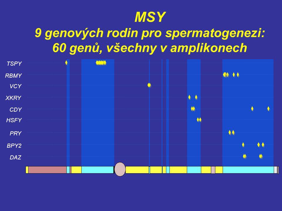 MSY 9 genových rodin pro spermatogenezi: 60 genů, všechny v amplikonech TSPY VCY PRY BPY2 DAZ RBMY CDY XKRY HSFY
