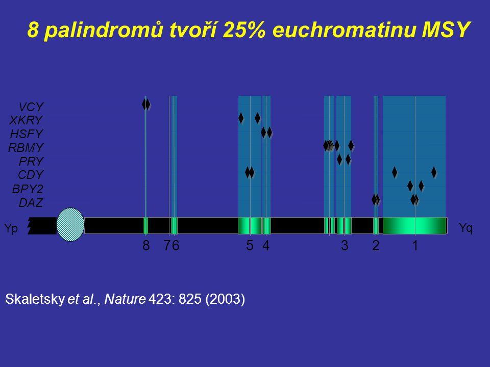 8 palindromů tvoří 25% euchromatinu MSY Yq Yp HSFY RBMY PRY VCY BPY2 DAZ CDY 86543127 XKRY Skaletsky et al., Nature 423: 825 (2003)