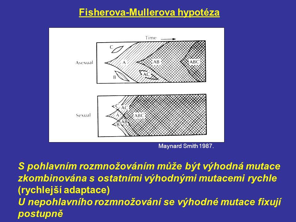 Fisherova-Mullerova hypotéza S pohlavním rozmnožováním může být výhodná mutace zkombinována s ostatními výhodnými mutacemi rychle (rychlejší adaptace)