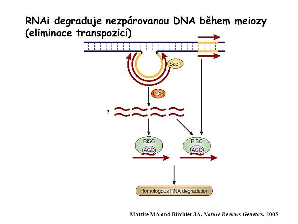 Nevýhody pohlavního rozmnožování  V gametách je pouze polovina naší genetické informace  Při rekombinaci ničíme osvědčený genotyp
