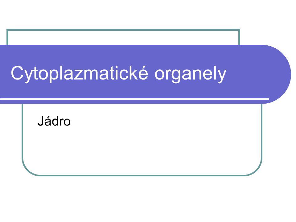 Cytoplazmatické organely Jádro