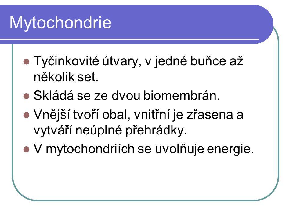 Mytochondrie Tyčinkovité útvary, v jedné buňce až několik set.