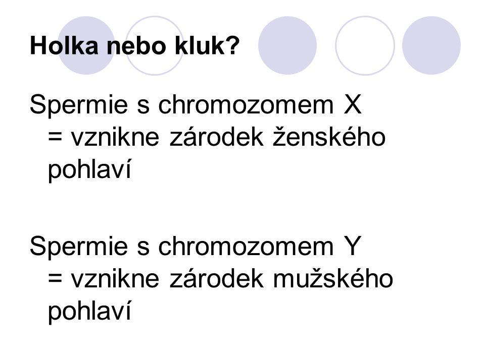 Holka nebo kluk? Spermie s chromozomem X = vznikne zárodek ženského pohlaví Spermie s chromozomem Y = vznikne zárodek mužského pohlaví