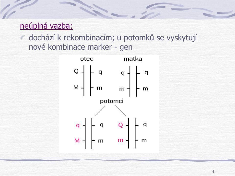 4 neúplná vazba: dochází k rekombinacím; u potomků se vyskytují nové kombinace marker - gen