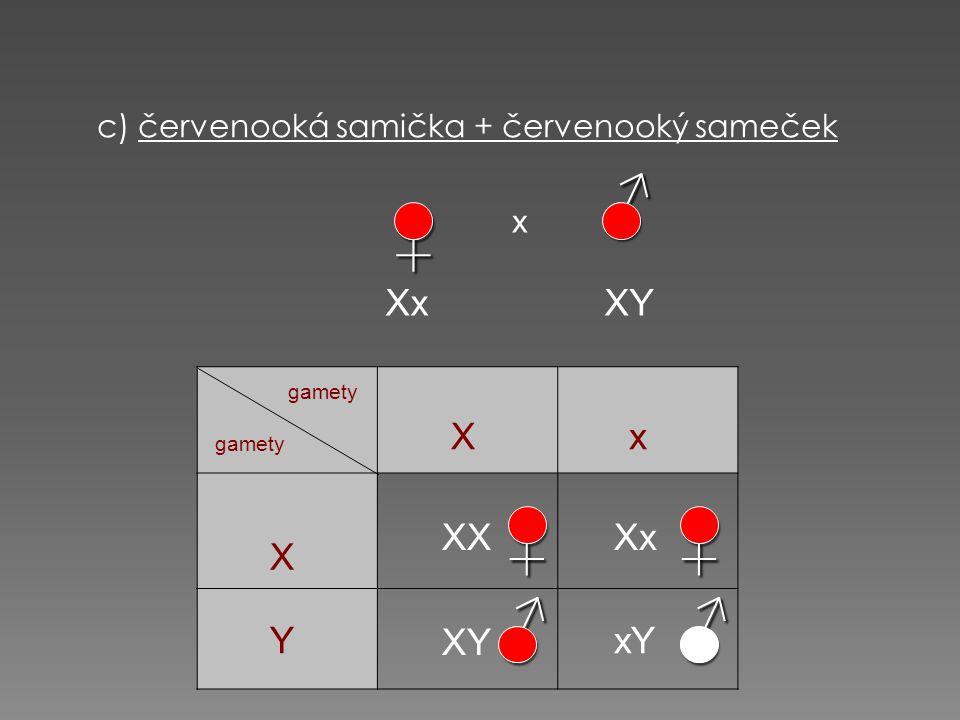 c) červenooká samička + červenooký sameček♀ x Xx XY♀ ♂♂ ♂ gamety X X Y x XXXx xY XY♀