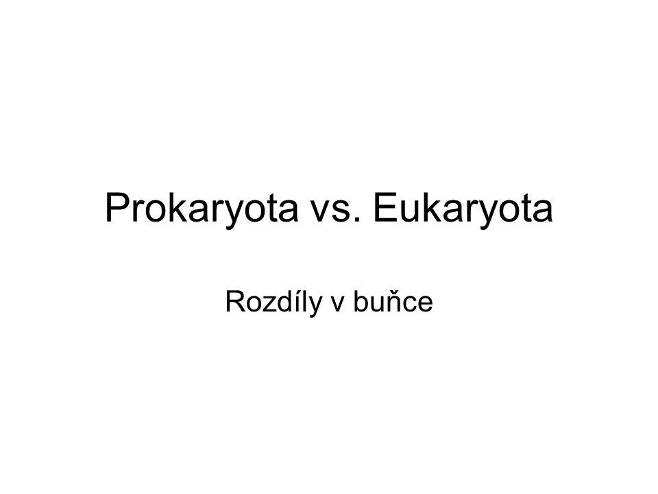 Prokaryota vs. Eukaryota Rozdíly v buňce