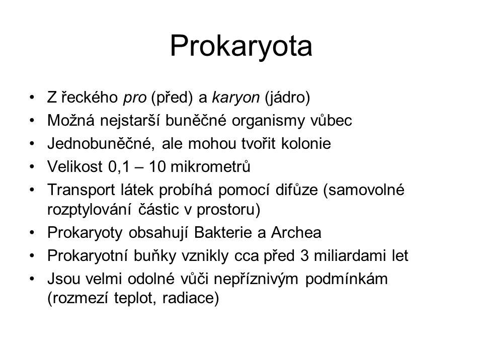 Prokaryota Z řeckého pro (před) a karyon (jádro) Možná nejstarší buněčné organismy vůbec Jednobuněčné, ale mohou tvořit kolonie Velikost 0,1 – 10 mikrometrů Transport látek probíhá pomocí difůze (samovolné rozptylování částic v prostoru) Prokaryoty obsahují Bakterie a Archea Prokaryotní buňky vznikly cca před 3 miliardami let Jsou velmi odolné vůči nepříznivým podmínkám (rozmezí teplot, radiace)