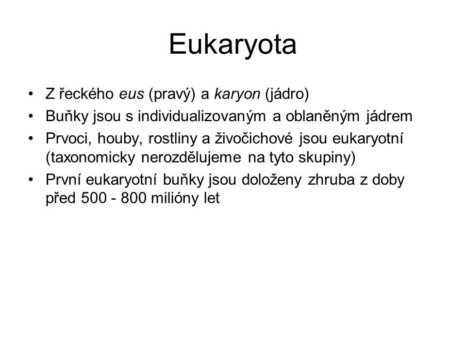 Eukaryota Z řeckého eus (pravý) a karyon (jádro) Buňky jsou s individualizovaným a oblaněným jádrem Prvoci, houby, rostliny a živočichové jsou eukaryotní (taxonomicky nerozdělujeme na tyto skupiny) První eukaryotní buňky jsou doloženy zhruba z doby před 500 - 800 milióny let