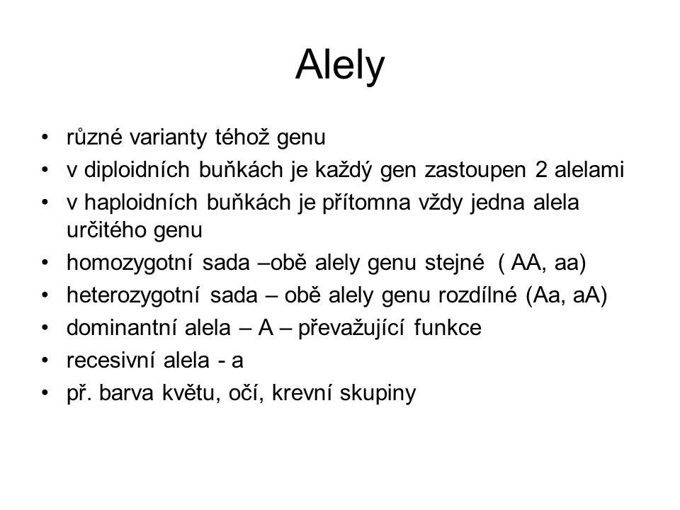 Alely různé varianty téhož genu v diploidních buňkách je každý gen zastoupen 2 alelami v haploidních buňkách je přítomna vždy jedna alela určitého genu homozygotní sada –obě alely genu stejné ( AA, aa) heterozygotní sada – obě alely genu rozdílné (Aa, aA) dominantní alela – A – převažující funkce recesivní alela - a př.