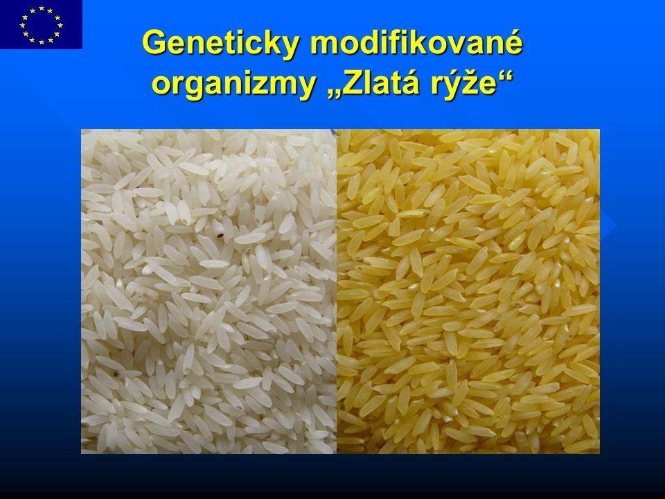 """Geneticky modifikované organizmy """"Zlatá rýže"""