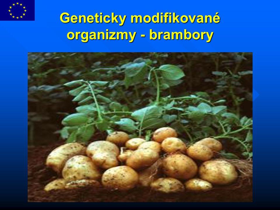 Geneticky modifikované organizmy - brambory