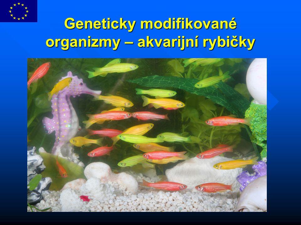 Geneticky modifikované organizmy – akvarijní rybičky
