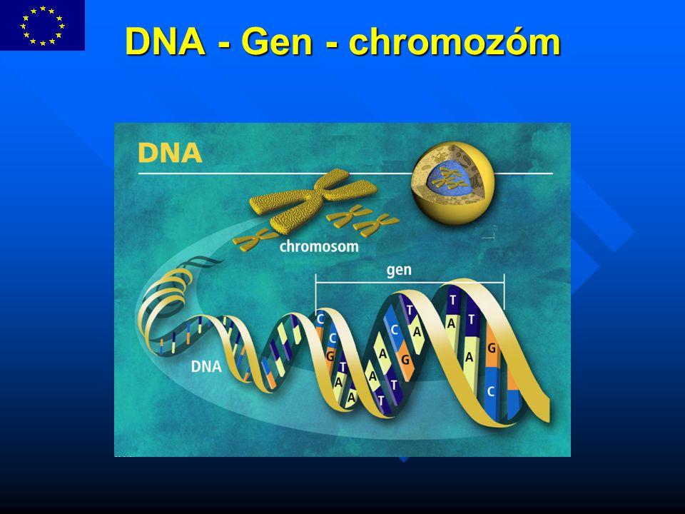 DNA - Gen - chromozóm DNA - Gen - chromozóm