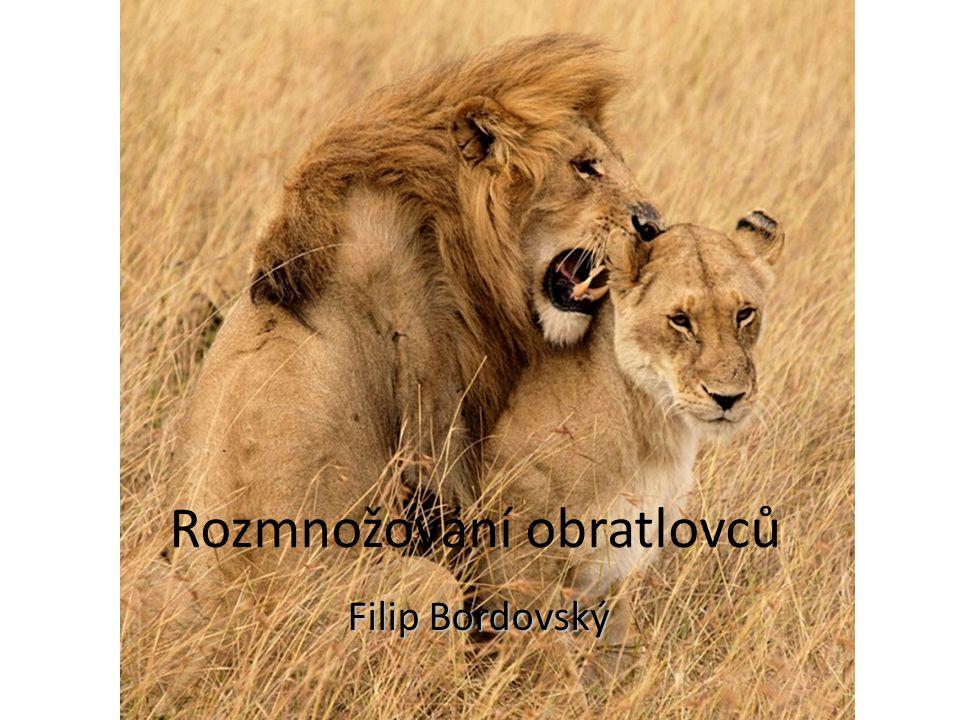 Rozmnožování obratlovců Filip Bordovský