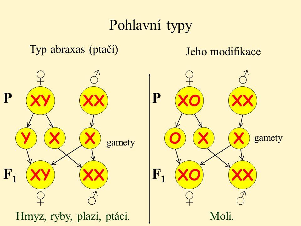Pohlavní typy Typ abraxas (ptačí) XY XX Y P X X XY XX Jeho modifikace F1F1 Hmyz, ryby, plazi, ptáci. XO XX O P X X XO XX F1F1 Moli. ♂ ♀ ♂ ♀ ♂ ♀ ♂ ♀ ga